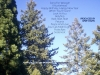 tree-tops & sky_back cover
